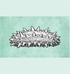trepang ink sketch vector image