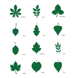 Set of silhouettes of leaves of different trees vector