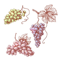 Grape set in color vector