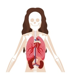 Half body woman with inner organs and bones vector