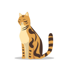 Purebred brown-spotted bengal cat cartoon vector