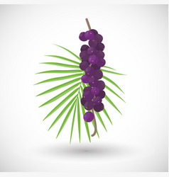 Acai berries flat icon vector