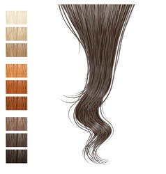 hair vector image vector image