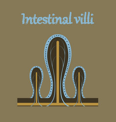 Human organ icon in flat style intestinal villi vector