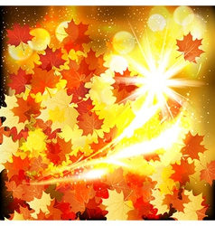 Autumn leaves design background vector image