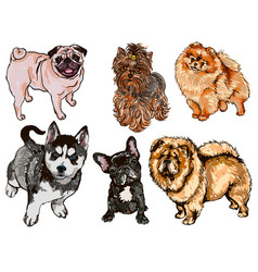 Colorful set of of dogs of different vector
