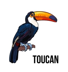 Hand drawn toucan seating on a tree branch vector image