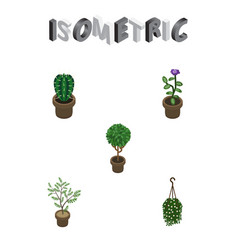 Isometric plant set of tree blossom peyote and vector