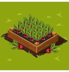 Vegetable garden box with beet set 3 vector