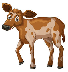 Little calf standing on white background vector