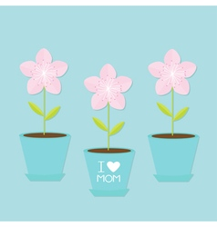 Sakura flower pot set Japan blooming cherry vector image vector image