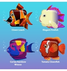 stylized fish are square vector image vector image