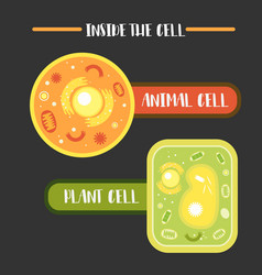 Inside the animal plant cell structure vector