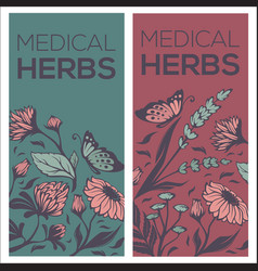 Medical herbs flowers plants and leaves two vector