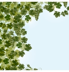 Vine abstract background with green leaves vector