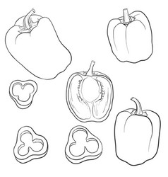 Drawing sweet pepper vector