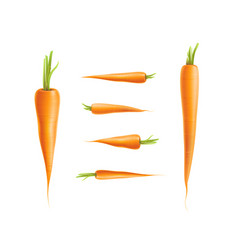 photo-realistic carrot set isolated vector image vector image