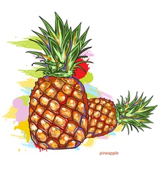 pineapple with colorful splashes vector image vector image