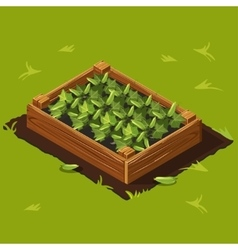 Vegetable Garden Box with Cucumbers Set 2 vector image vector image