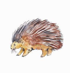 Watercolor drawing of porcupine or hedgehog vector