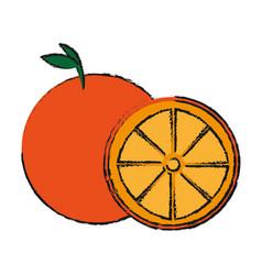 Orange fruit icon vector