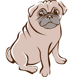 pug outline drawing vector image