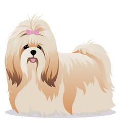 shih tzu dog vector image