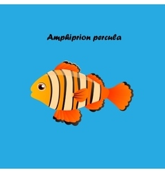 Ocellaris clownfish vector