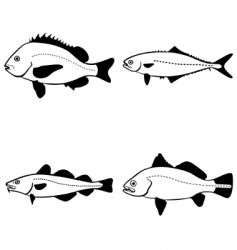 vector fish vector image vector image