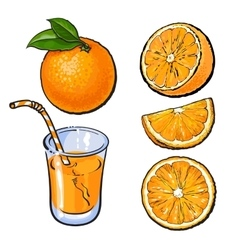 Oranges and a glass of freshly squeezed juice vector
