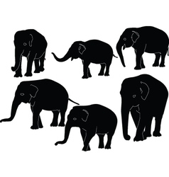 Elephants collection - vector