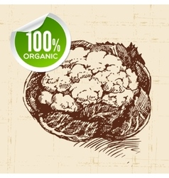 Hand drawn sketch vegetable cauliflower eco food vector