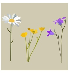 Flowers in summer vector