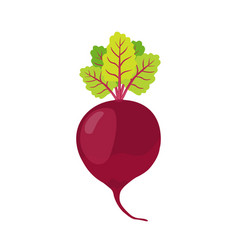 beetroot cartoon style vegetarian fresh food vector image vector image