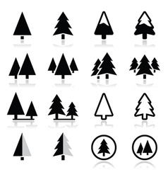 Pine tree icons set vector image