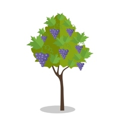 Purple grapes hanging on a bush vector