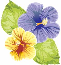 Hibiscus design vector