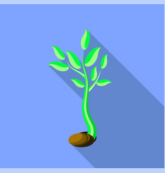 Plant growth little green sprout seedling vector
