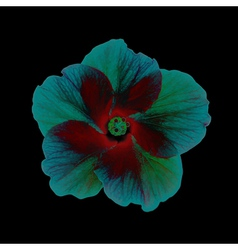 Fantastic Hibiscus Head vector image