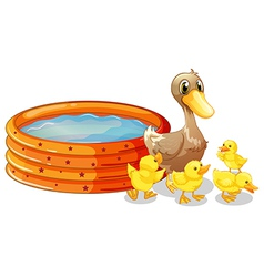 An inflatable pool at the back of the five ducks vector image