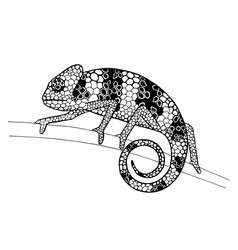 Chameleon on a branch ink drawing vector