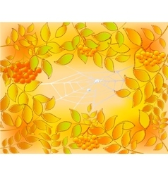 Background of autumn leaves rowan and web with vector