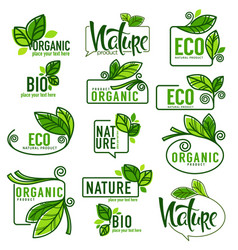 large collection of doodle eco bio nature and vector image