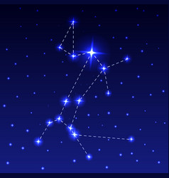 the constellation of the big dog vector image