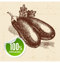 Hand drawn sketch vegetable eggplant eco food vector