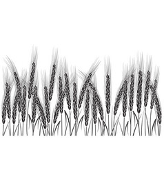 black wheat isolated on white background vector image