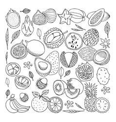 Tropical fruits  doodle set vector