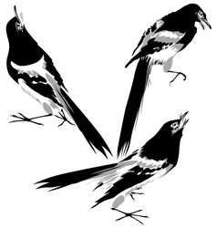 bird illustration vector image