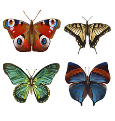 Collection of various kinds of butterflies vector