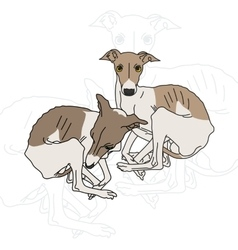two Italian greyhound vector image